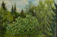 Цветущий орех
